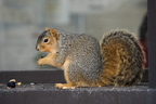 15-Squirrel-0121-RB-09