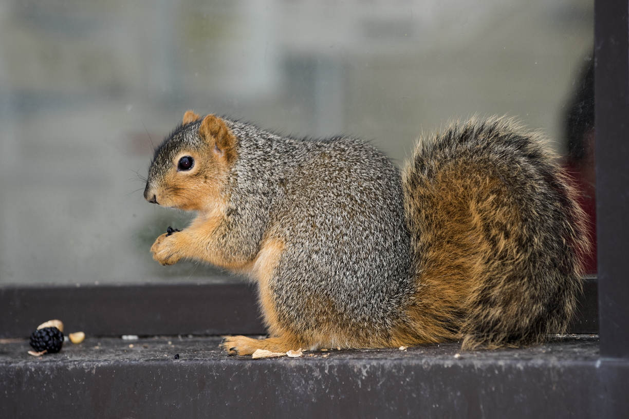 15-Squirrel-0121-RB-09.jpg