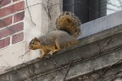15-Squirrel-0121-RB-12