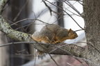 15-Squirrel-0121-RB-13