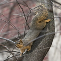 15-Squirrel-0121-RB-14