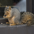 15-Squirrel-0121-RB-06