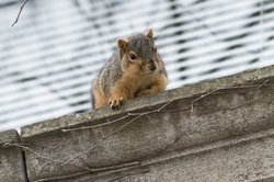 15-Squirrel-0121-RB-05