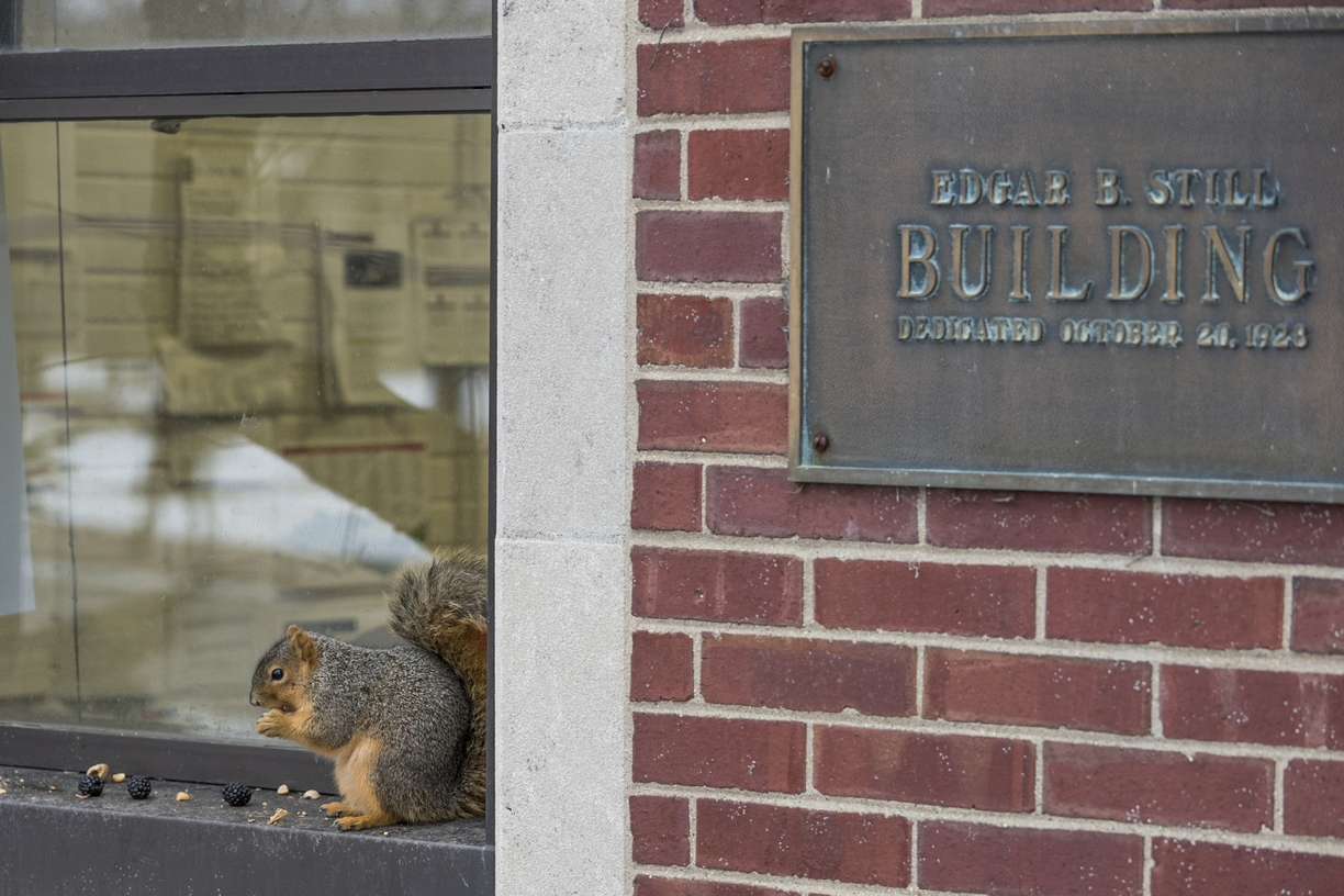 15-Squirrel-0121-RB-04.jpg