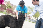 15-Therapy Dogs-0504-WD-019