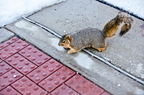 16-Squirrel-Appreciation-Day-0114-ML-01