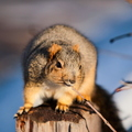 16-Squirrel-Appreciation-Day-0114-ML-02