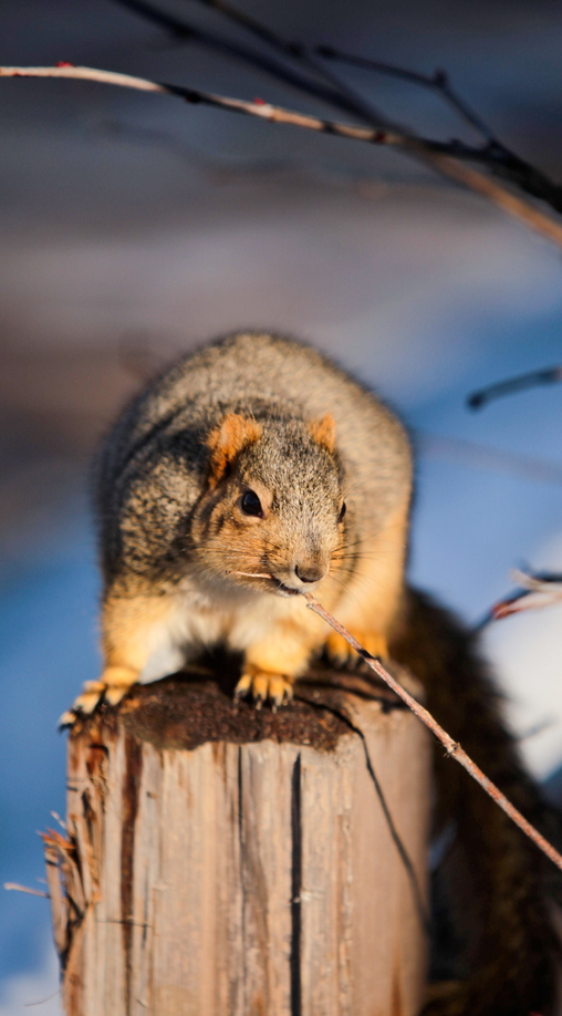16-Squirrel-Appreciation-Day-0114-ML-02.jpg
