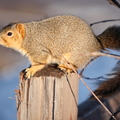 16-Squirrel-Appreciation-Day-0114-ML-03