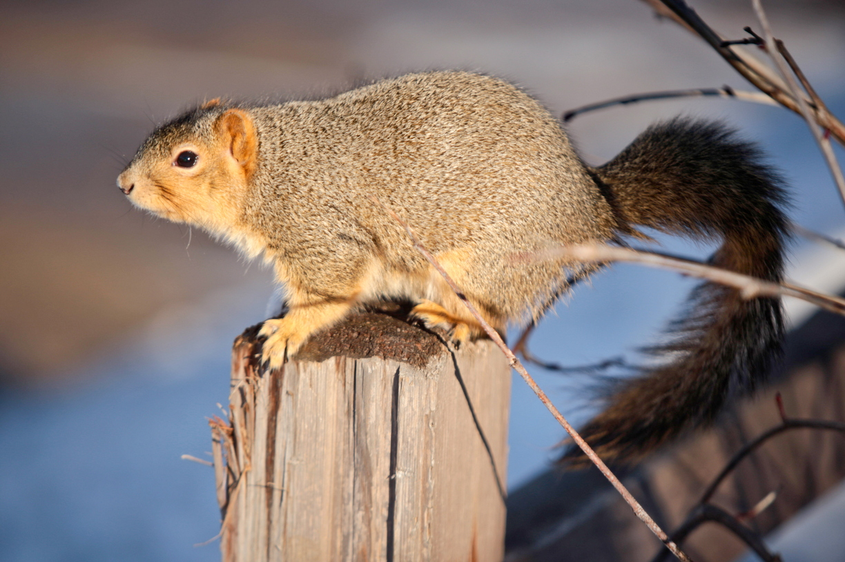 16-Squirrel-Appreciation-Day-0114-ML-03.jpg