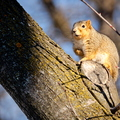 16-Squirrel-Appreciation-Day-0114-ML-04