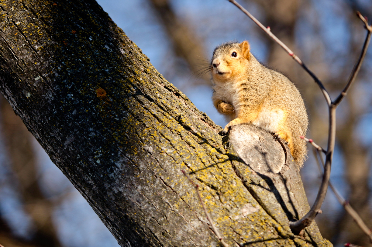 16-Squirrel-Appreciation-Day-0114-ML-04.jpg