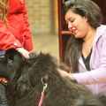 15-Therapy-Dogs-1208-ML-03