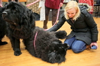 15-Therapy-Dogs-1208-ML-06