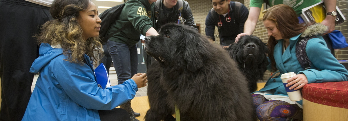 16-TherapyDogs-0510-SW-01
