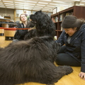16-TherapyDogs-0510-SW-05