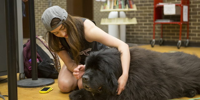 16-TherapyDogs-0510-SW-07