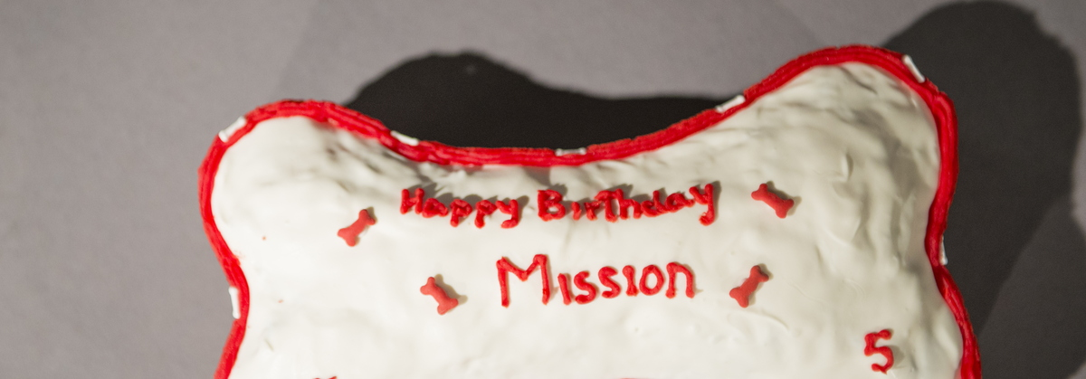 16-Mission Fall & Smash Cake-1027-DG-269