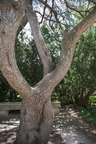 17-Kissing Bench Tree-0619-WD-09