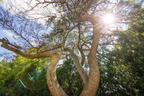 17-Campus and Forward Together Forward Gardens-0807-DG-003
