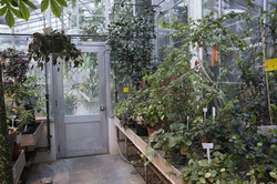18-Greenhouse-0313-WD-27