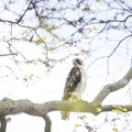 18-Still Hall Hawk-0517-DG-016