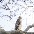 18-Still Hall Hawk-0517-DG-017