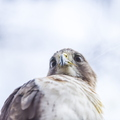 18-Still Hall Hawk-0517-DG-032