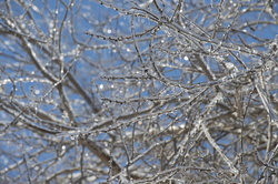 19-Ice_on_Trees-0213-WD-03.NEF