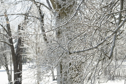 19-Ice_on_Trees-0213-WD-14.NEF