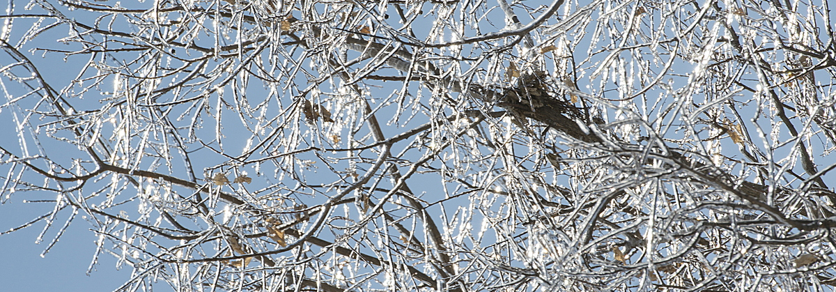 19-Ice_on_Trees-0213-WD-19.NEF