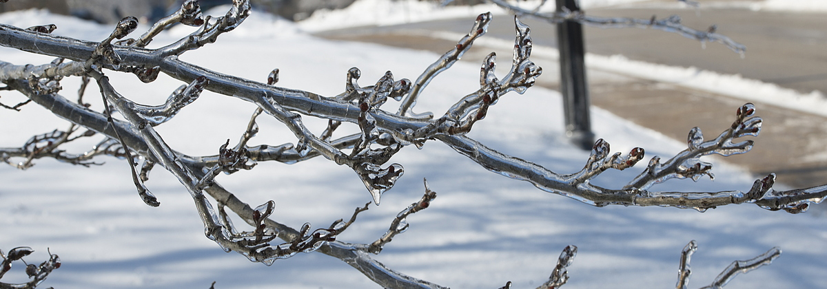 19-Ice_on_Trees-0213-WD-23.NEF